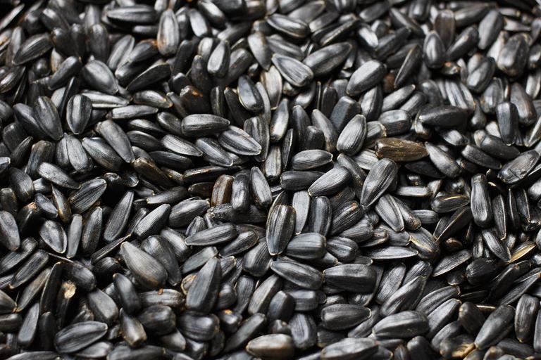 Piața semințelor de floarea-soarelui și rapiță–nivel național, regional, global; acestea își mențin atractivitatea din punct de vedere al prețurilor. stiri