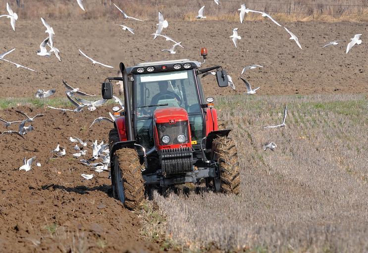 Fermierii din Dobrogea sunt forțați să își vândă utilajele și terenurile după seceta recentă și recoltele dezastruoase de care au avut parte; stiri agricole