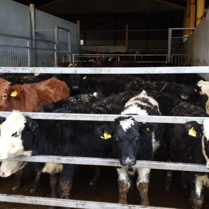 Instituirea unei scheme de ajutor de stat pentru susținerea activității crescătorilor din sectorul bovin, în contextul crizei economice generate de COVID