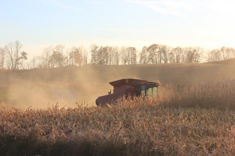 Raport piața cerealelor - 8 decembrie 2020; Piata graului; Piata porumb; Piata floarea soarelui; Piata rapita; cotatii; stiri agricole
