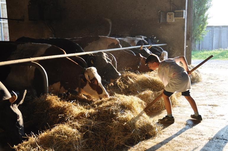 Fermierii suceveni vor deschide o fabrică de lactate în Șaru Dornei; Peste 100 de fermieri s-au adunat în cooperativa agricolă Caşcaşaru Dornei; stiri agro