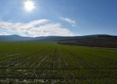 Imposibil să compensăm costurile de producție cu veniturile din vânzarea produselor agricole