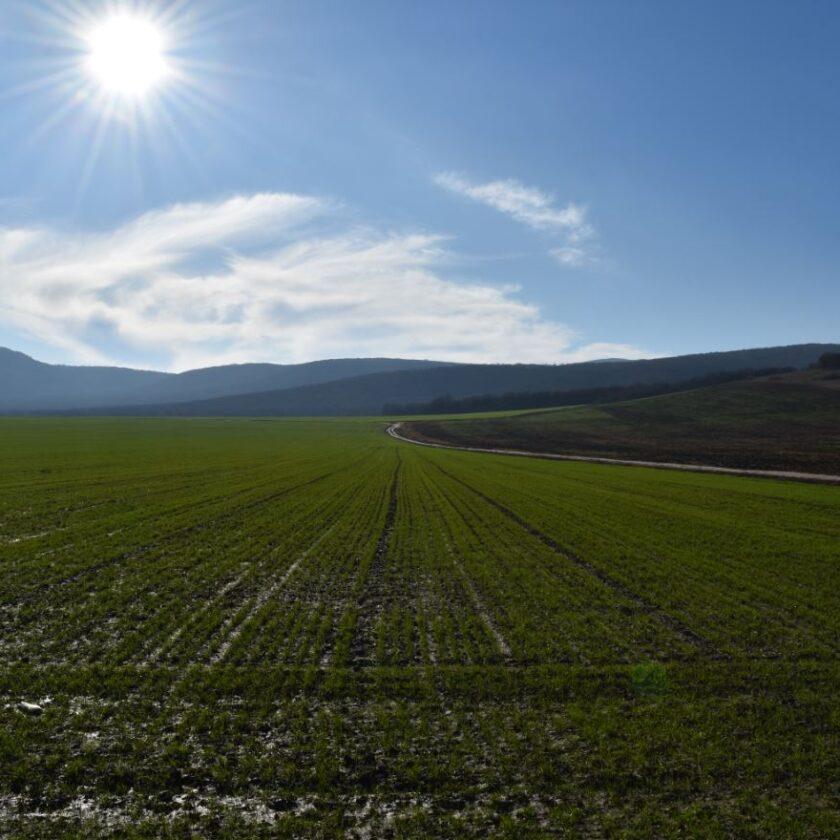 Imposibil să compensăm costurile de producție cu veniturile din vânzarea produselor agricole. Grâul ar trebui vandut la 1.500 lei pe tonă. Stiri agricole