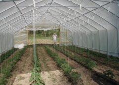 Sprijinul Cuplat Vegetal (SCV) continuă și în 2021