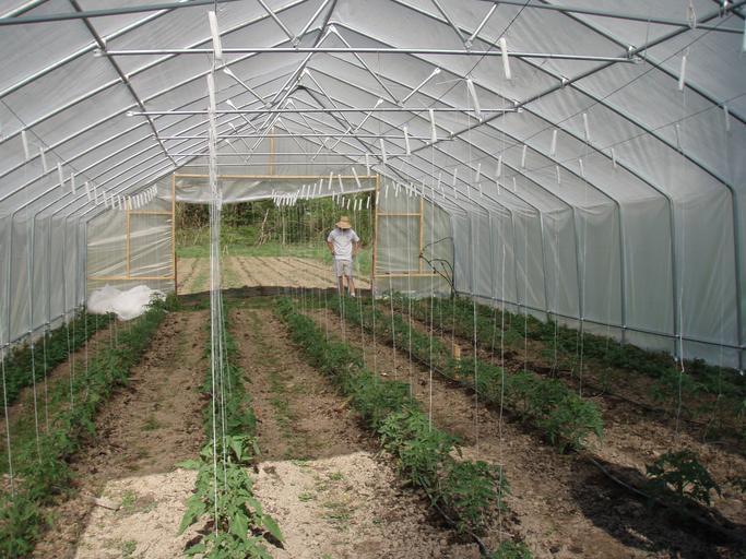 Sprijinul Cuplat Vegetal continuă și în 2021; 4880 euro/hectar pentru legume în spații protejate și 1800 euro pentru tomate pentru procesare; stiri agricole