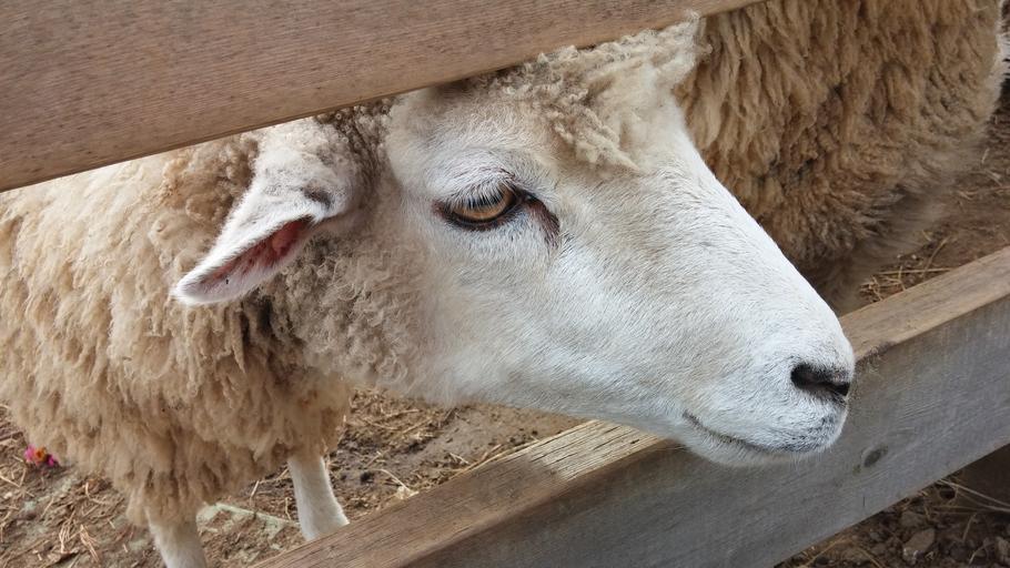 Fermierii pot depune la APIA cererile de plată pentru ajutorul de stat în sectorul creşterii animalelor; Cererile se depun la sediile Centrelor Judeţene