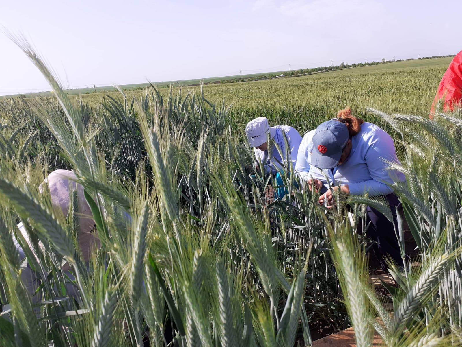Analiza sănătății plantelor, calea spre succes; Prin îngrijirea proactivă a sănătății plantelor, fermierii pot evita aparitia bolilor si a daunatorilor