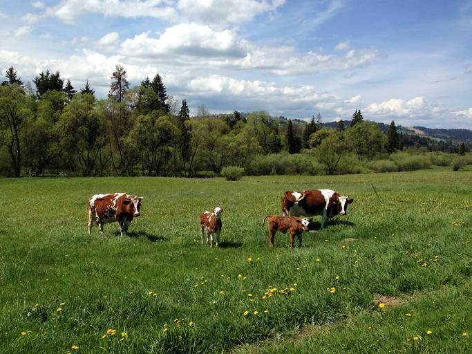 Deţinătorii de animale nu datorează impozit pe terenul cultivat cu nutrețuri; Suprafeţele de teren cultivate pentru producţia destinată furajării animalelor