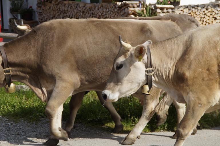 ANT-urile discutate cu crescătorii de bovine la MADR; discuții pe tema modului de acordare a Ajutoarelor Național Tranzitorii (ANT) bovine; stiri agricole