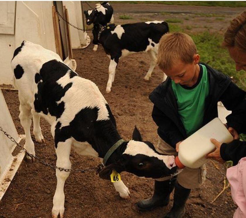 Modelul fermei de familie riscă să moară; fermierii primesc doar un procent mic din prețul pe care consumatorul îl plătește pentru alimente. stiri agricole