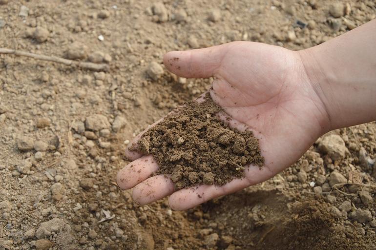 """Câteva """"scăpări"""" ale celor care recomandă fermierilor planuri de fertilizare; Informații greșite și recomandări corecte; stiri agricole"""