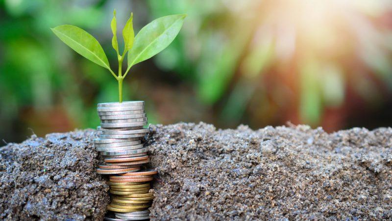 Program de 3,2 miliarde de euro bani europeni pentru investiţii în agricultură; măsuri de sprijin pentru investiţii în agricultură în perioada 2021-2024