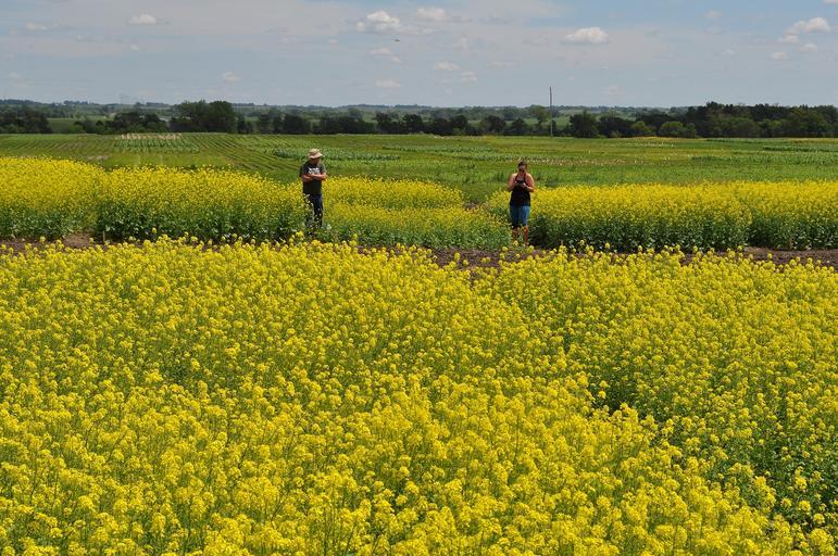 Cum moare agricultura românească în miros de busuioc și usturoi. Cifrele care arata dezastrul: producem putin si prost. Stiri agricole