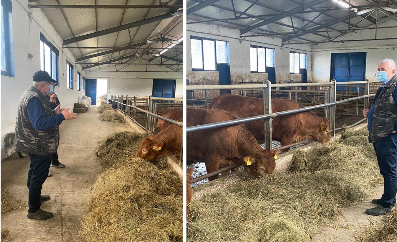"""Vaca de carne, o opțiune tot mai serioasă și mai sănătoasă a fermierilor din România! aceste vaci reprezintă """"banca mea"""". Stiri agricole"""