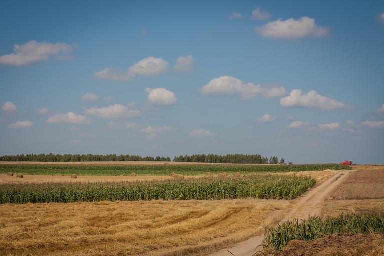 Olanda este țara cu cel mai scump teren agricol din Europa, cu prețuri de 70.000 euro/ha. În România, pământul este de până la 13 ori mai ieftin. Stiri