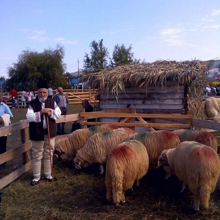 ANZ face precizări privind eliberarea adeverințelor pentru SCZ ovine/caprine. Acte necesare pentru adeverința ANZ, depuse de fermieri la BJ/OJZ-uri. Stiri