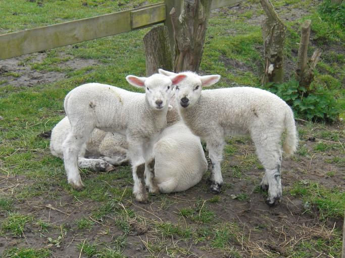 Ajutor de stat pentru eliminarea samsarilor; ajutor de stat pentru abatoarele care achizitionează animale de la fermele mici și mijlocii; stiri agricole