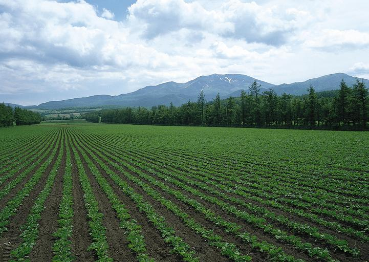 S-au aprobat plafoanele financiare alocate măsurilor de sprijin cuplat în sectorul vegetal pentru anul de cerere 2020. Stiri agricole