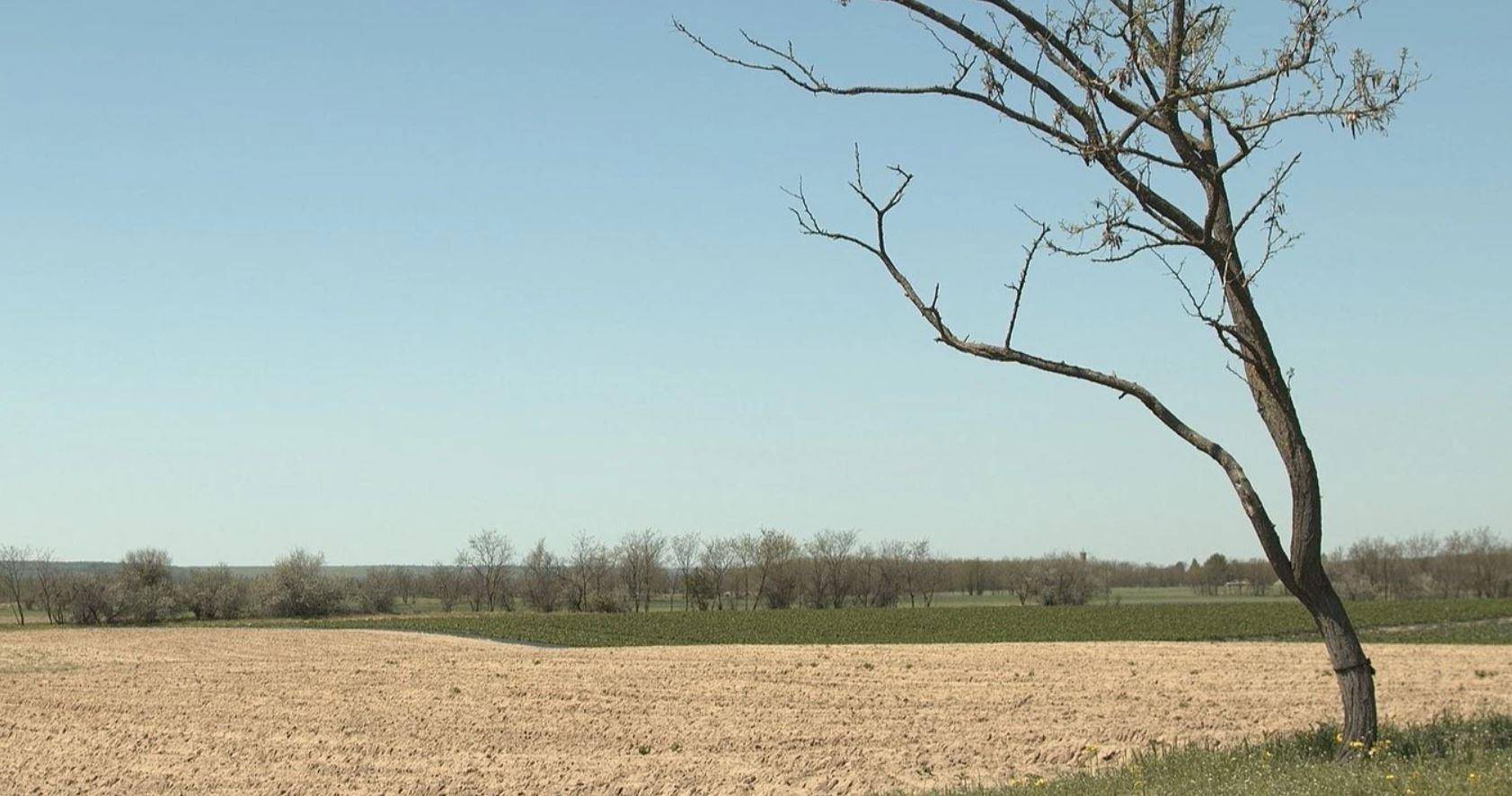 Lupta fermierului Iulică Dinu cu seceta și deșertificarea. Majoritatea localnicilor au abandonat însă lupta cu seceta și își lasă terenurile pârloagă. Stiri
