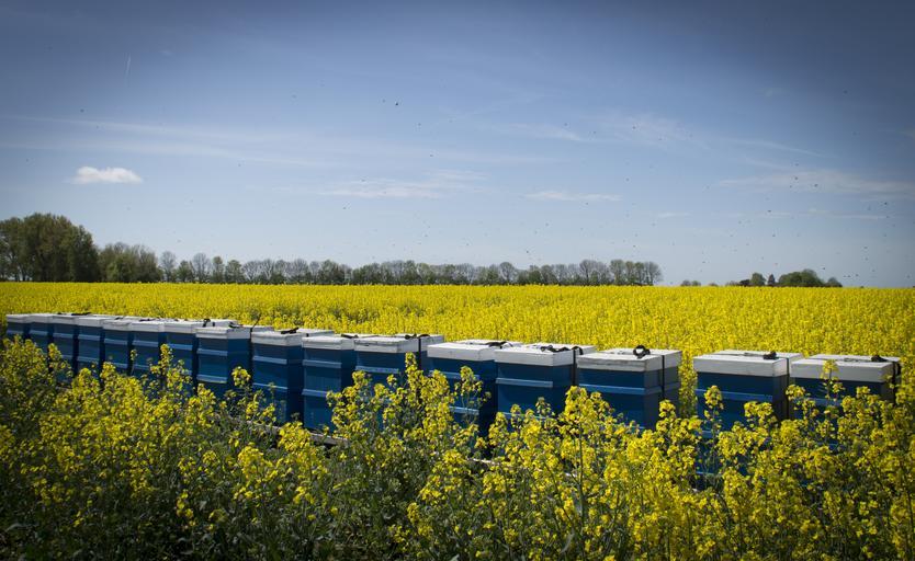 Modificări asupra Programului Naţional Apicol pentru perioada 2021-2022; Pentru procesarea cerii și ambalarea mierii sunt necesare fonduri mai mari. Stiri