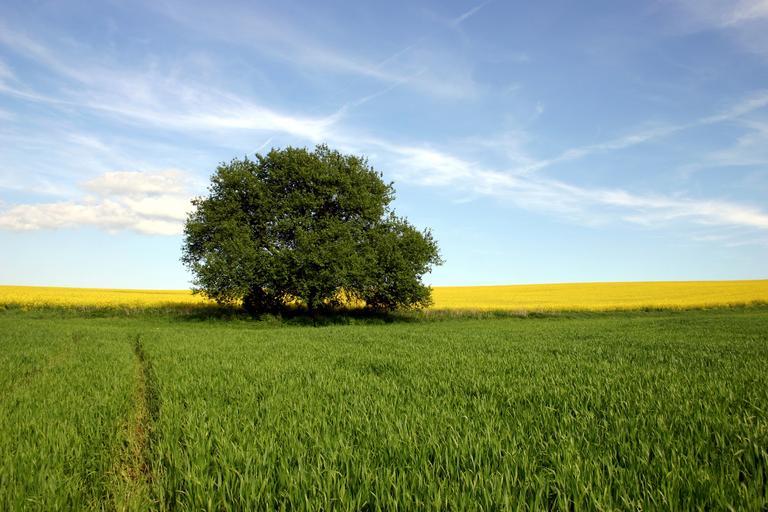 Rezerva de umiditate și starea de vegetaţie a culturilor agricole. cultura grâului de toamnă. cultura porumbului. Stiri agricole