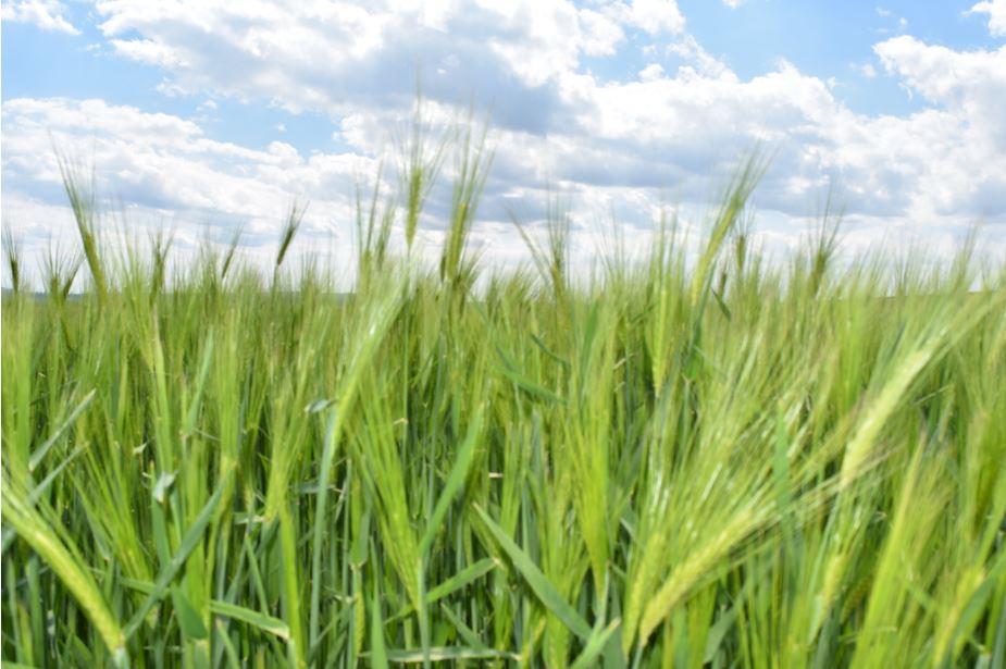 APIA autorizează plățile aferente sprijinului cuplat în sectorul vegetal. Plățile pentru schemele de sprijin cuplat în sectorul vegetal se fac în lei. Stiri