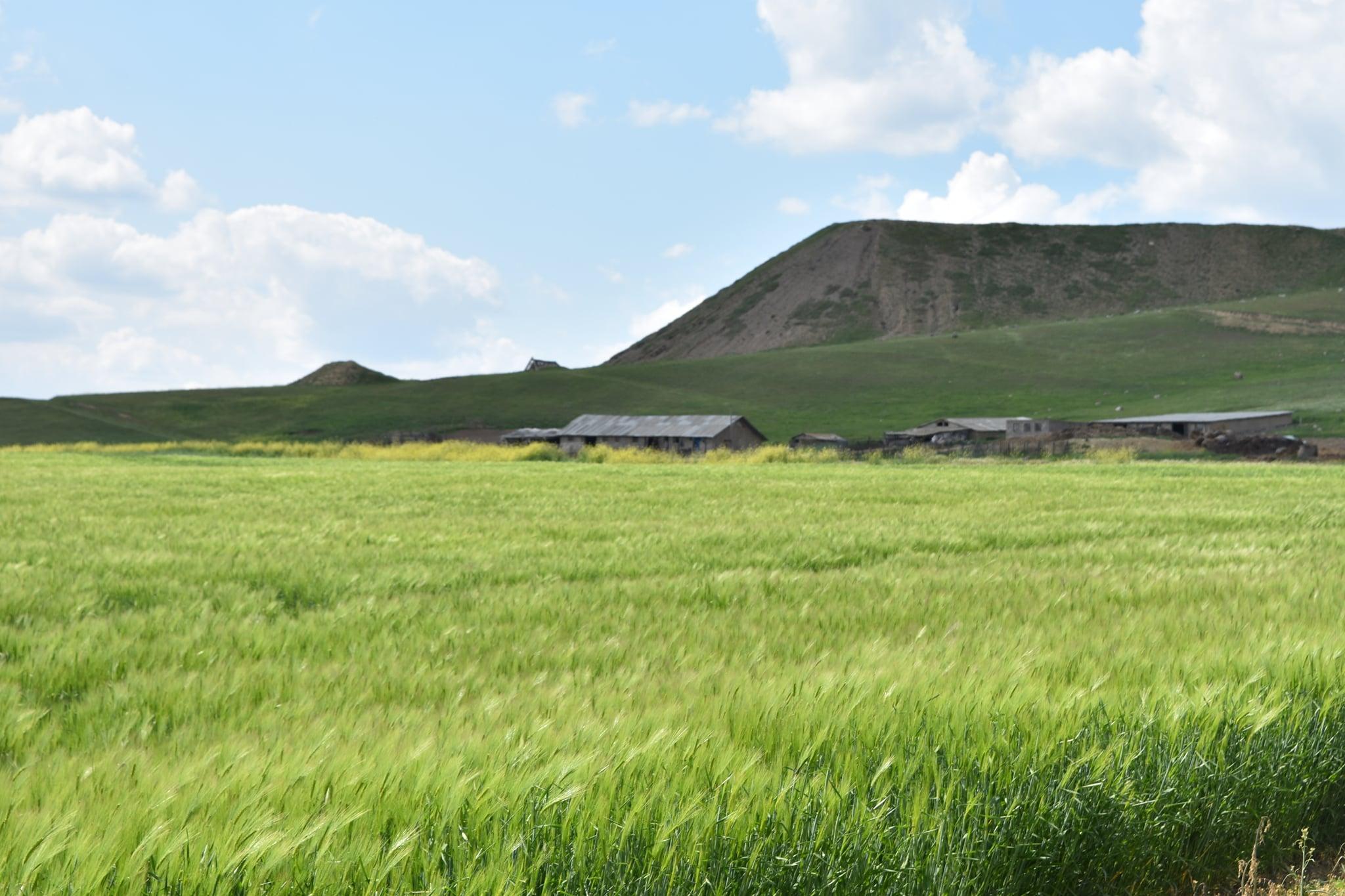 Să câştige şi fermierii nu numai comercianţii; Culturile agricole arată bine, chiar dacă unele lucrări au fost întârziate; Stiri agricole
