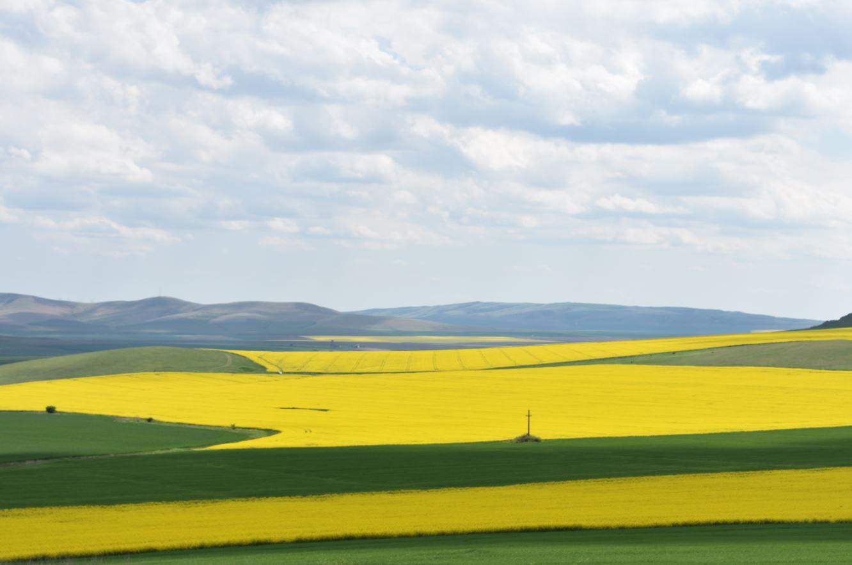 Recensământul General Agricol se va desfăşura în perioada 10 mai-31 iulie 2021. cele mai multe și printre cele mai mici exploatații agricole. Stiri agricole