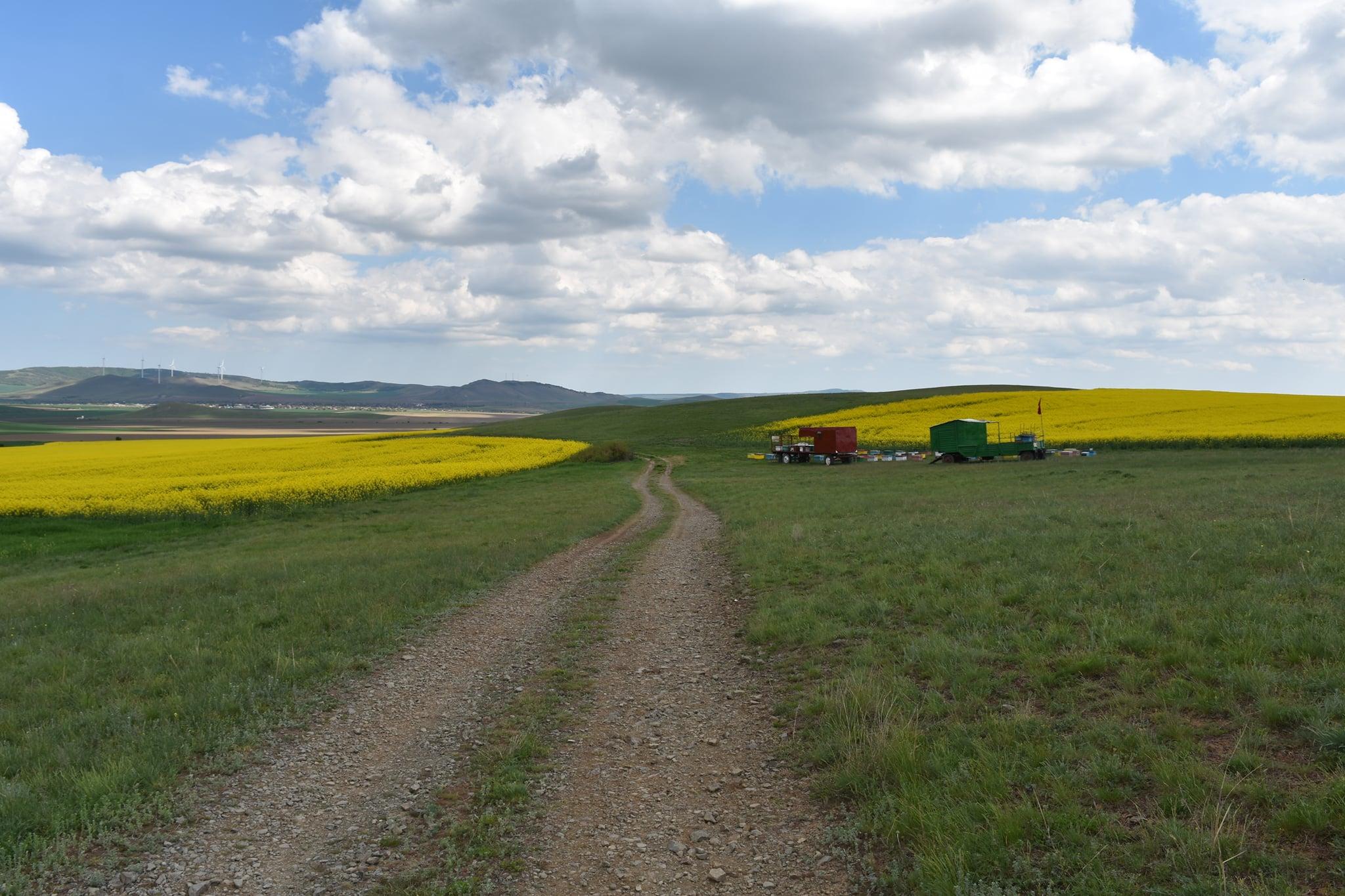 Iar vrem să modificăm Legea vânzării terenurilor agricole. Reglementare a vânzării terenurilor agricole situate în extravilan. Stiri agricole