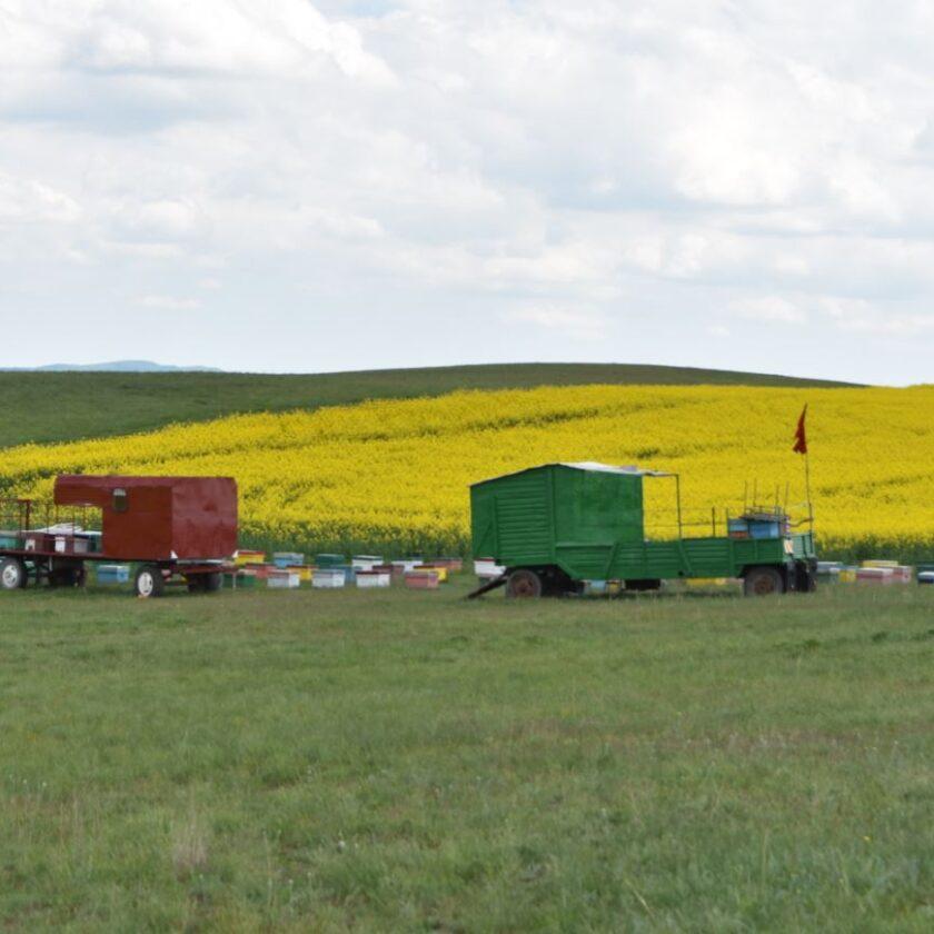 APIA primește cereri de intenție pentru accesarea Programul Naţional Apicol (PNA); Cererile se vor depune până la data de 31.o6.2021. Stiri agricole