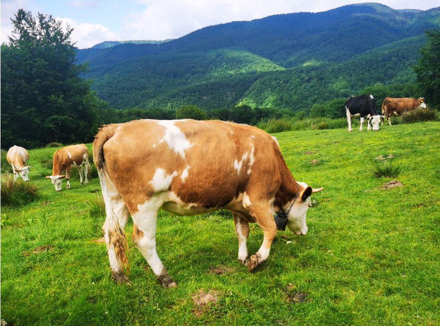 APIA - beneficiari, criterii de eligibilitate și documente pentru ajutorul de stat în sectorul bovin. Sprijin ajutor de stat Covid 19. Stiri agricole