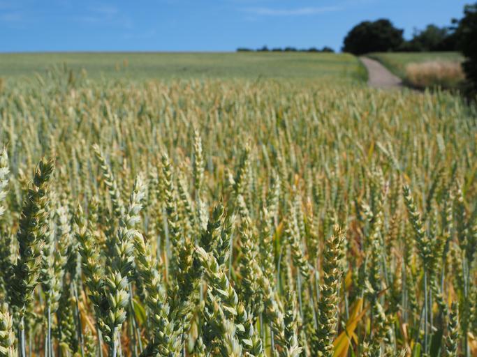 Ce subvenții primesc fermierii europeni? Fondurile reprezintă o parte din veniturile agricole. Fermierii europeni primesc sume foarte diferite. Stiri agro