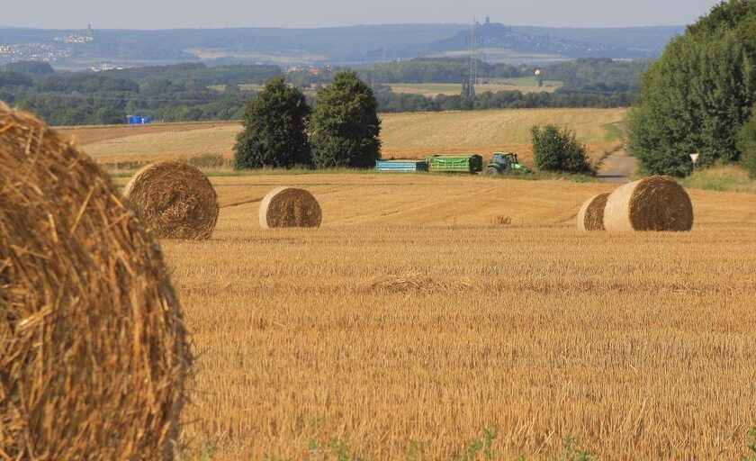 Prețurile la cereale cresc din nou. Deficiențe de calitate, eșec al culturilor și prognoze de recoltă din ce în ce mai slabe. Stiri agricole