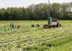 Fondurile puse la dispoziția legumicultorilor. 4.600 de euro/ha, o sumă de 150 de milioane euro pentru construcția de sere, sau depozite. Stiri agricole