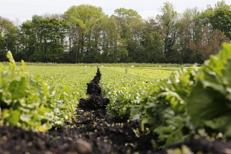 Sindicale din agricultură solicită acordarea unui ajutor de stat pentru legumicultori. Verificarea importurilor de legume din statele non UE. Stiri agricole