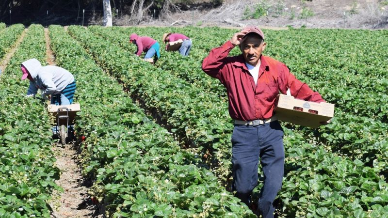 """Noua PAC pune bazele celui de-al treilea pilon """"social"""". Reforma politicii agricole comune a introdus noul concept de dimensiune socială. Stiri agricole"""