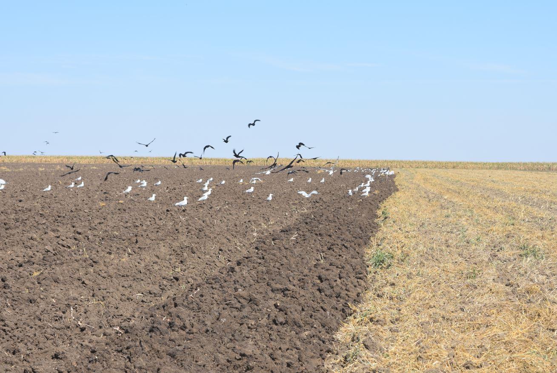 Bruxelles-ul începe să întrebe – Care este stadiul PNS-ului? PNS va stabili drumul agriculturii românești în următoarea periodă. Stiri agricole