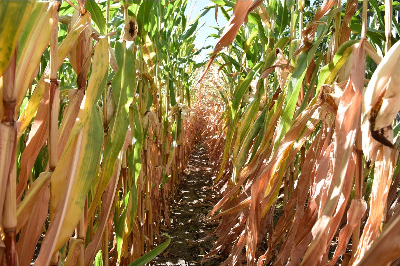 """Fraudă în agricultura ecologică. Marjele ridicate când produsele convenționale sunt """"reetichetate"""" în produse organice. Stiri agricole"""