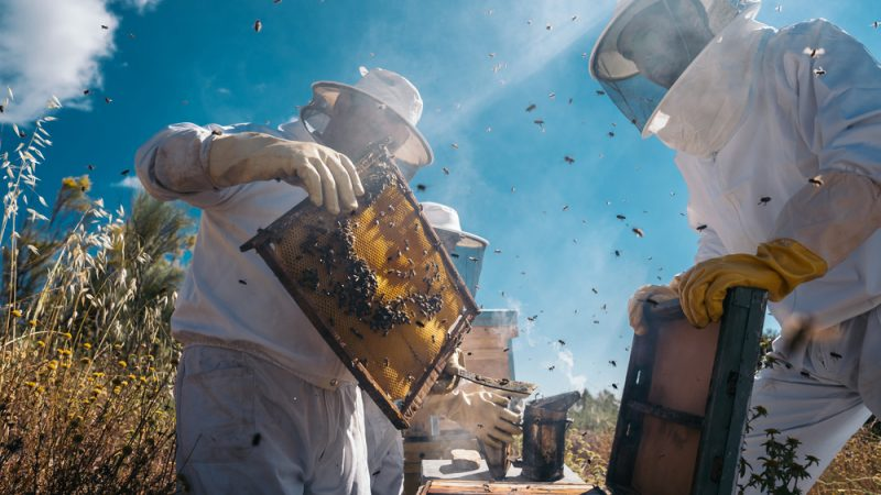 Incendiile din Grecia au distrus sectorul apicol, deschizând calea pentru importuri ieftine și frauduloase. Stiri agricole