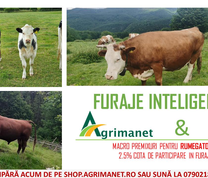 Furaje inteligente: Macropremixuri pentru rumegătoare - 2.5% cotă de participare. Furaje pentru vaci de lapte, vitei, tineret taurin la ingrasat, oi.