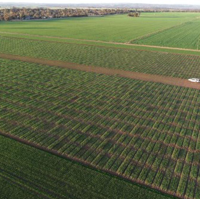 Cum putem mări eficiența utilizării îngrășămintelor? Fermierii nu pot vedea ce fac, deoarece nu există o modalitate clară de monitorizare. Stiri agricole
