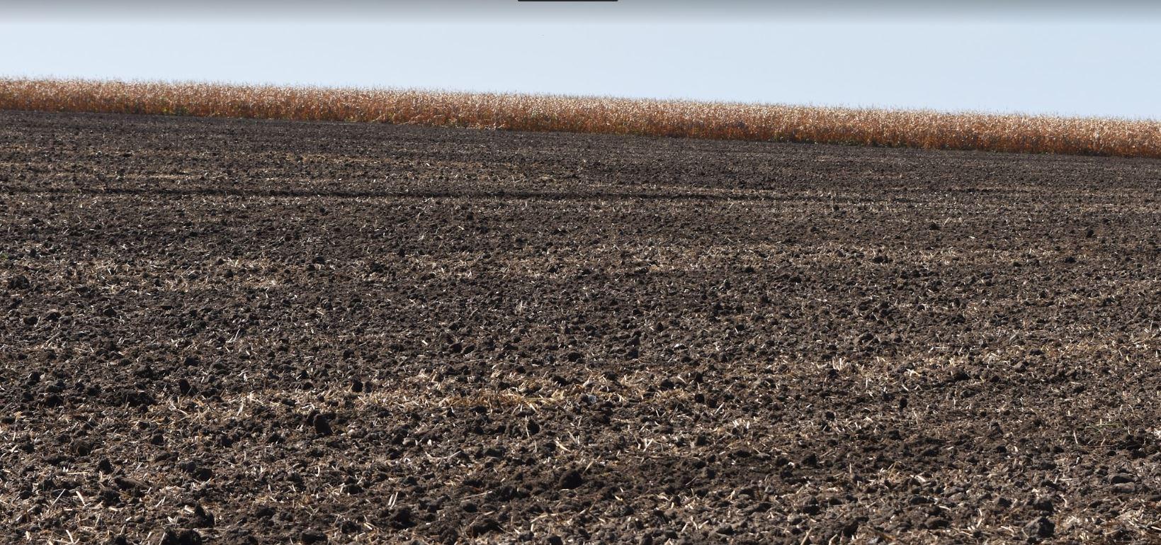 Valoarea producţiei în agricultură a scăzut anul trecut cu 15,4%, până 81,4 miliarde de lei în preţuri curente. Stiri agricole