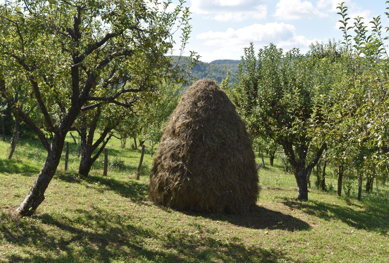 Concentrați-vă pe fermele mici și mijlocii. Producția ecologică este în mod natural destinată fermelor mai mici. Stiri agricole